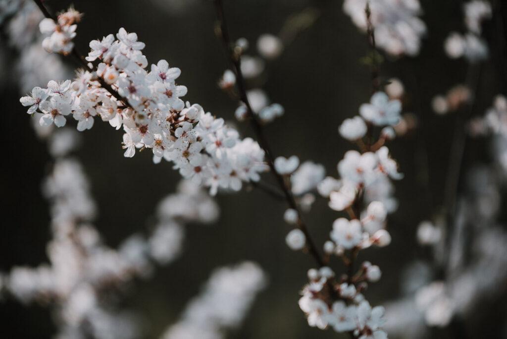 Numerologi, numerolog, april, månedsenergi, dagsenergi, forår, mirabellegrene