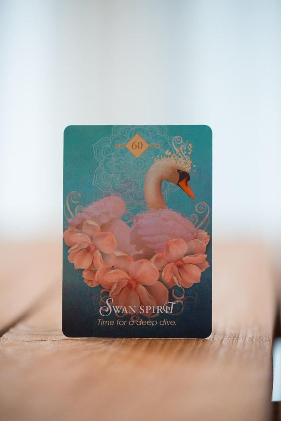 orakelkort af colette baron-reid sat i relation til de numerologiske energier i januar måned, numerologi Zoey Elinor, the spirit animal oracle